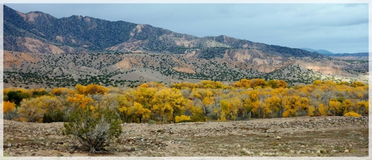 cottonwoods (NM) -cropaweb