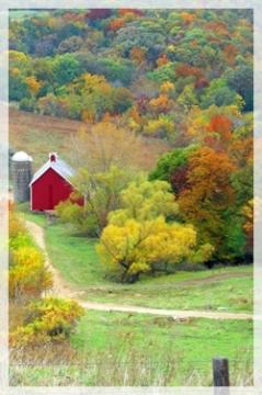 farm-BuenaVistaIA243web