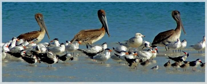 clam pass - naples FL