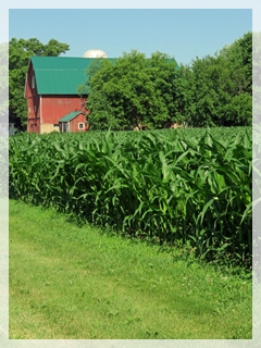 July corn Illinois