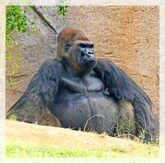 upland gorilla