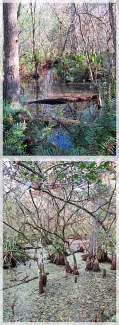 Corscrew Swamp Sanctuary