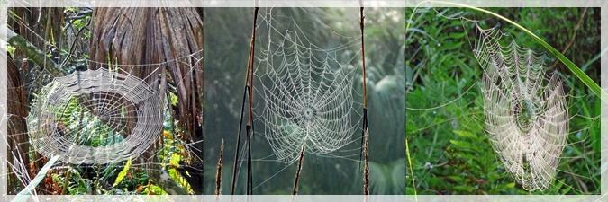 spider webs - corckscrew swamp