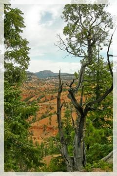 Bryce - Losee Canyon