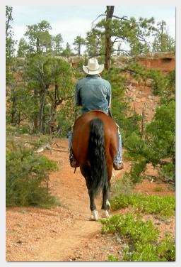 cowboy - Losee Canyon - Bryce