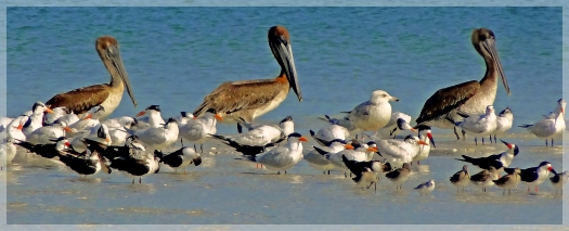 clam pass birds naples fl