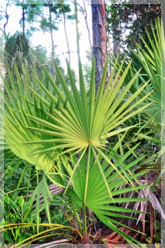 palm - ncp7943aw