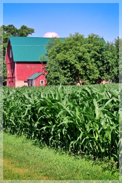 Illisnois corn field - farm
